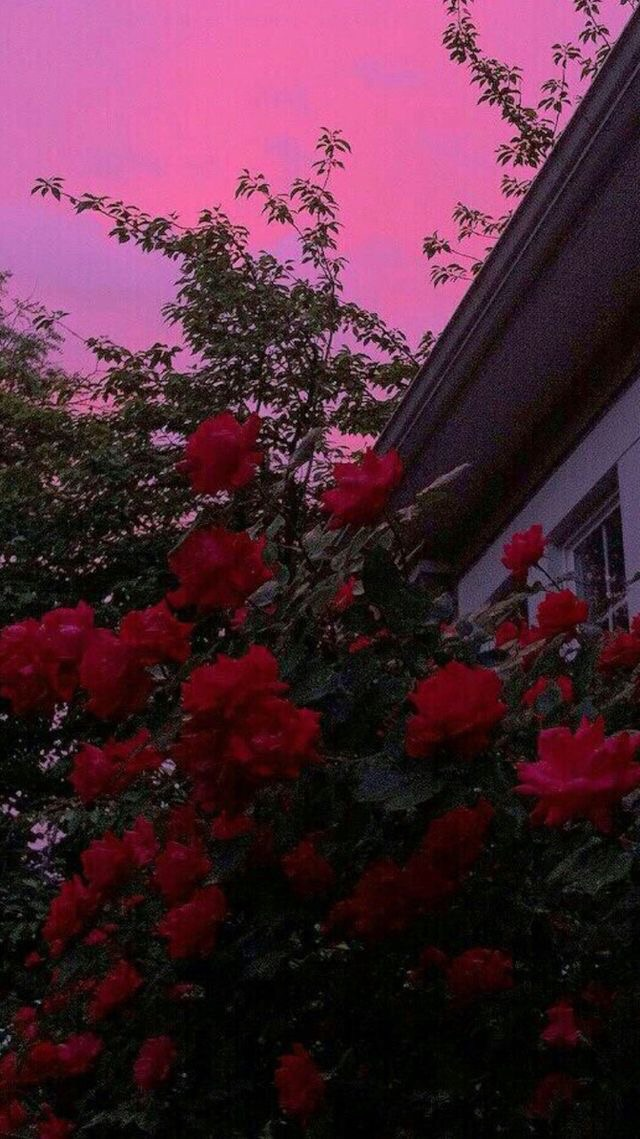 Rose Clouds Sun Pink Aesthetic Artistic Rose Home