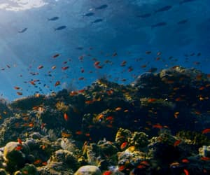 gif, ocean, and under the sea image