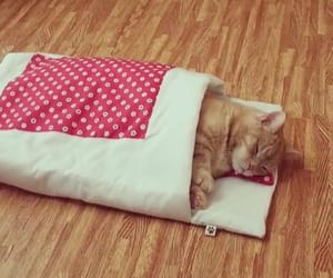 animals, bed, and cat image