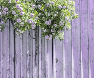 lilac, lilacs, and purple image