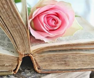 book, rose, and vintage image