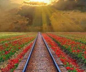flowers, hope, and light image
