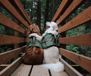 dog, nature, and puppy image