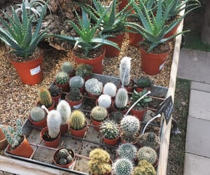 cacti, greenhouse, and places image