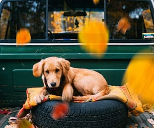 dog, fall, and puppy image