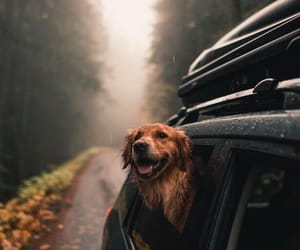 dog, travel, and cute image
