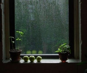 rain, window, and plants image