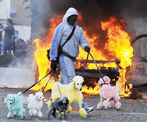 fire and dogs image