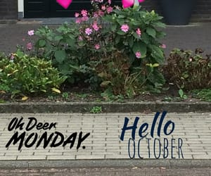 autumn, flowers, and monday image