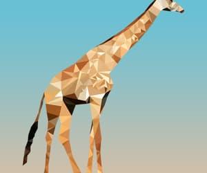 animal, giraffe, and white image