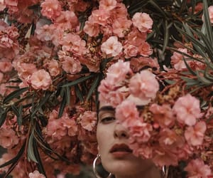 beauty, flowers, and photography image