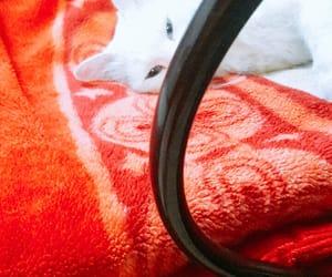 albino, cats, and cotton image