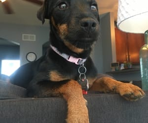 black dog, mutt, and puppy image