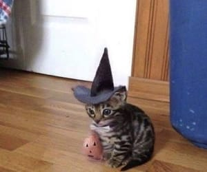 animal, cat, and Halloween image