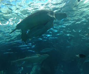 animals, turtle, and underwater image