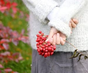 autumn, berries, and fall image