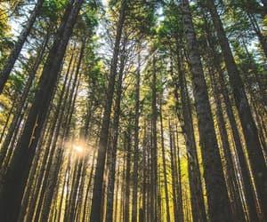 belleza, bosque, and naturaleza image