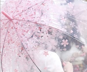 pink and umbrella image