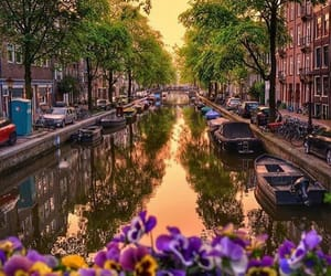 travel, amsterdam, and flowers image