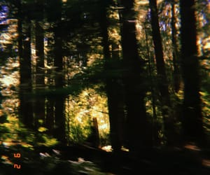 forest, pacific northwest, and photography image