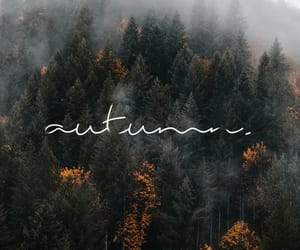autumn, forest, and fog image