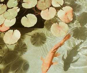 aesthetic, fish, and water image