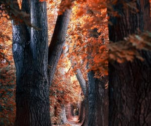 forest, pathway, and photography image
