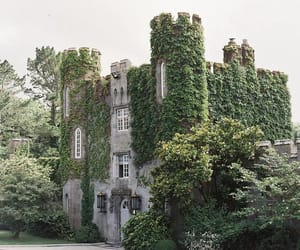 architecture, ivy, and castle image