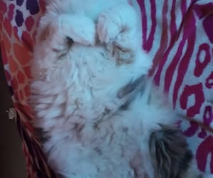 cat, cat lady, and gatito image