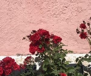 beautiful, roses, and tumblr image