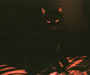 cat, black, and Halloween image