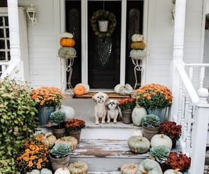 autumn, dogs, and fall image