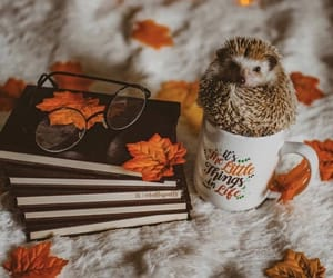 autumn, fall, and animal image