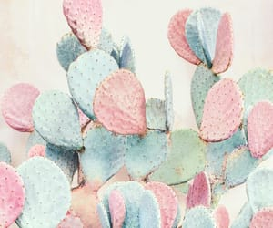 cactus, nature, and pink image