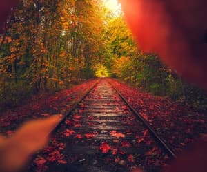 autumn, beauty, and colorful image