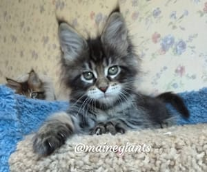 animals, fluffy, and fur image