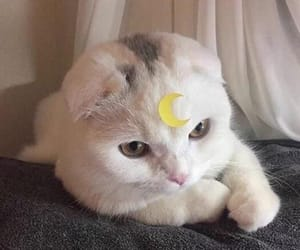 cat, cute, and moon image
