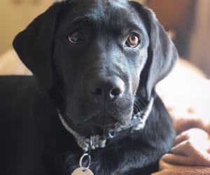 bale, dog, and pet image