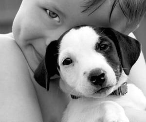 dog, boy, and puppy image