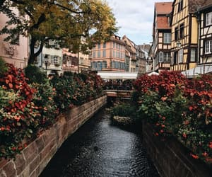 travel, flowers, and theme image