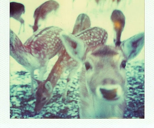 deer, animals, and fawn image