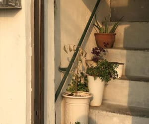 plants, aesthetic, and flowers image