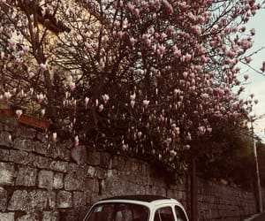 car, flowers, and home image
