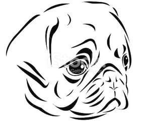 art, head, and pug image