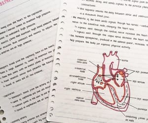 champagne, college, and heart image