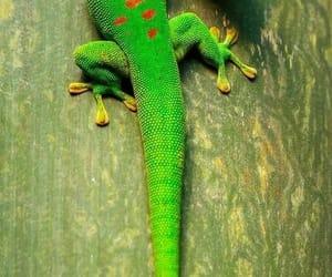green, lizard, and cute image
