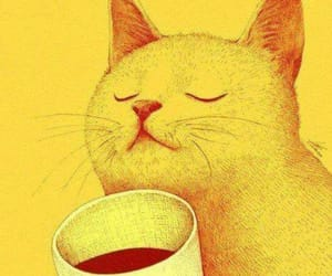 cat, coffee, and tea image