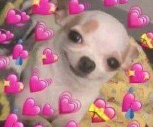 dog, hearts, and meme image