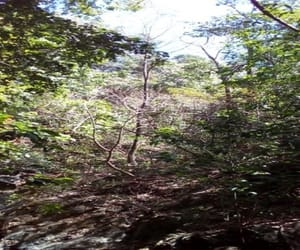 nosara real estate, nosara lots for sale, and costa rica surfing image