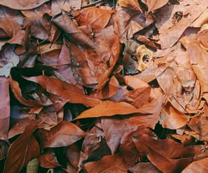 brown, leaf, and nature image